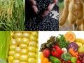Preços agrícolas deverão permanecer elevados, prevê OMC