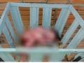 Mãe diz que abandonou bebê por achar que ela estava morta